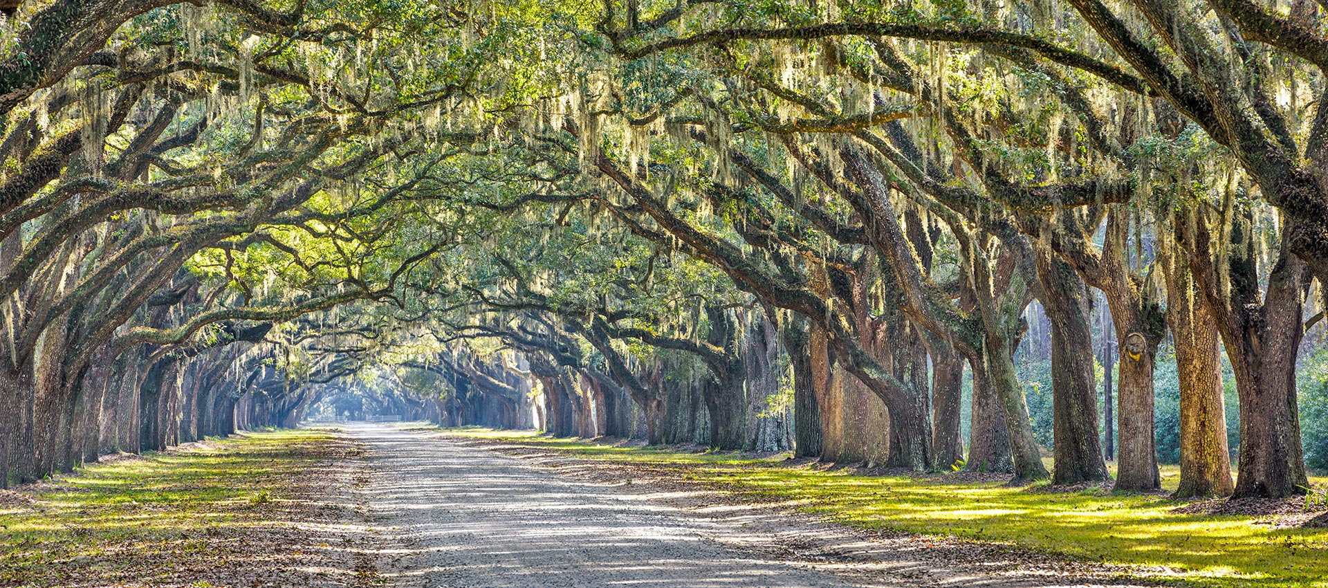 Wormsloe Plantation Savannah GA